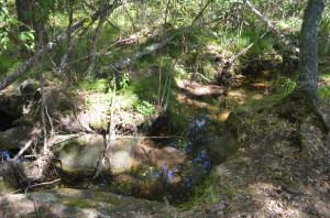 Сосновый лес в долине Кендара
